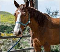 Shea Center Horse